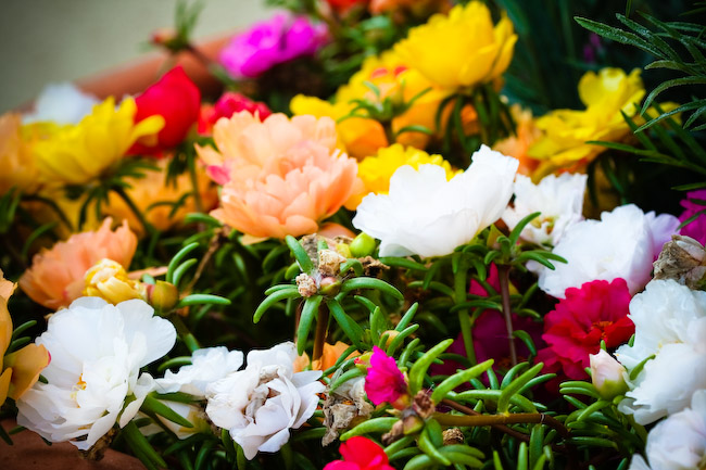 IMG_3126fall flowers