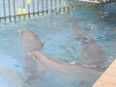 PIC_0098 (scubawatters) Tags: hawaii oahu blowhole sealifepark
