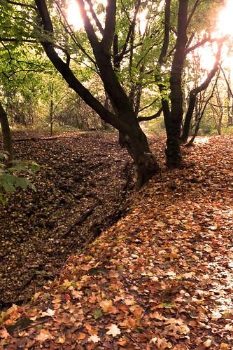 Les Feux de l'Automne (Autumn Lights)