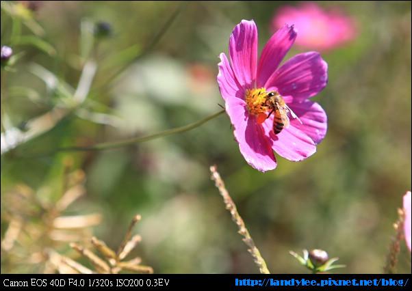9711-新社花海:Date with Bee_075.jpg