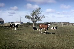 Friesen Farm. Chortitz Sk.