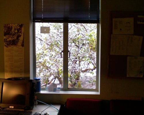 outside my office window