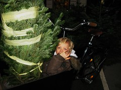 Felix and the Tree