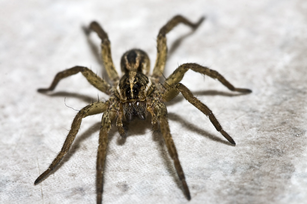 Oklahoma Spider Identification http://photography-on-the.net/forum/showthread.php?t=618984