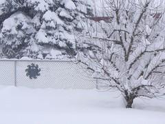 snow 006