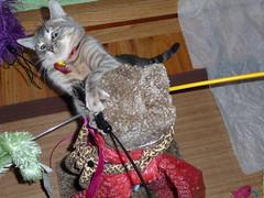 It's Minnnnne......... (Lora Jabot) Tags: cats kittens kitties