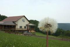 Large Weeds (jlbaynard) Tags: photo experimental perspective tricks trickphotography forcedperspective