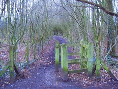 path_behind_methodist_church_7026