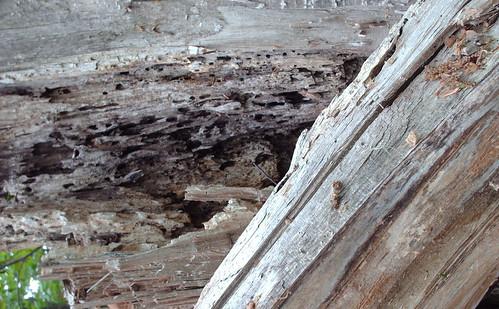 DesignM.ag Bark Texture - 11