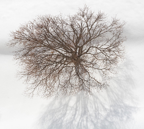 Tree top Tree
