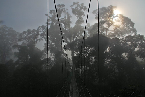 Canopy Walk At Dawn
