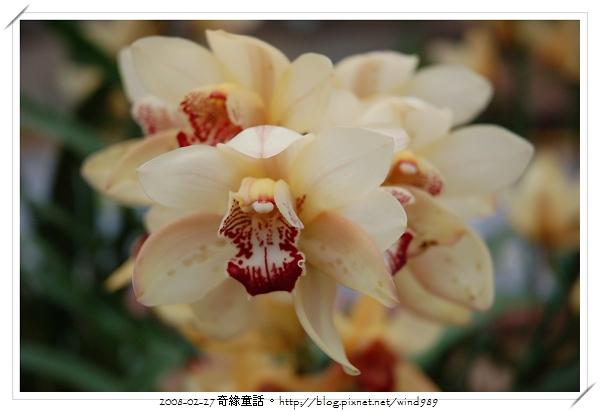 DSC_2578東亞蘭