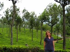 IMG_9307 (ciaokss) Tags: india tea teaplantation munnar