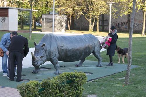Elongated Rhino