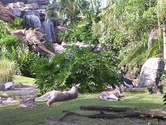 kangaroos at the tree of life