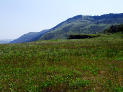 Preserve Meadow (BoscoMtn) Tags: grass oregon meadow columbiagorge rowenacrest springqtr tommccallpreserve