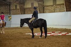 Cappi standing 4 (Tisane) Tags: horses dressage cappi