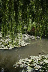 IMG_0832 (Peter Chow) Tags: france monet waterlillies giverny monetsgarden july2008