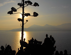 the Bay of Calvi, early morning (Werner Schnell (1.stream)) Tags: morning sunrise bay nikon corse calvi corsica soe ws korsika agaveamericana mywinners diamondclassphotographer flickrdiamond goldstaraward wernerschnell