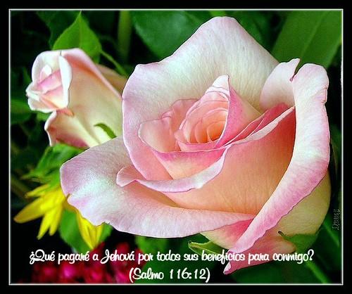 Salmo116.12 por Nancy Geoda.