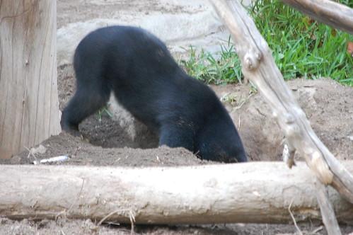 zoo 203