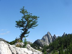 Larch with Prussik Peak