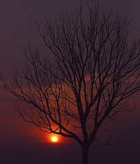 Sunset & Silhouette (Firdaus Mahadi) Tags: sunset tree silhouette malaysia kajang rm semenyih nikkor70300vr bandarteknologikajang restoranalmehraj firdausmahadi