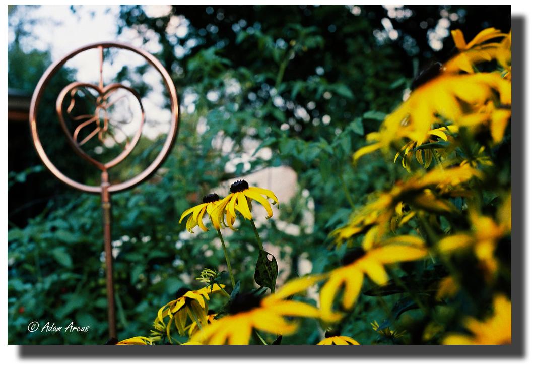 Love & Life in the Garden