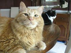 Jasper and Josie