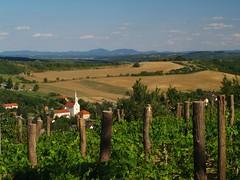 """De szar itt élni"" -Hungary (.e.e.e.) Tags: county plants church architecture landscape vineyard hungary village vine olympus baranya e400 olympuse400 gödre"