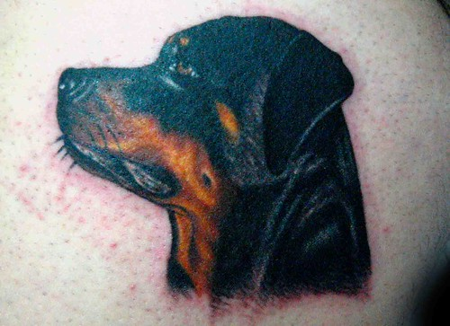rottweiler. rottweiler tattoo