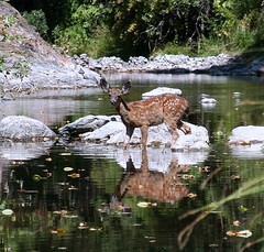 Fawn Crossing Creek  -  Trinity County, California (Beyond the Trail [Gary]) Tags: california creek 510fav reflections fawn connections naturesfinest trinitycounty hayfork creekcrossing abigfave garytrinity