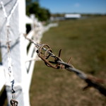 Barbed Wire Perspective thumbnail