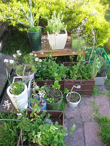 My garden of pots and crates