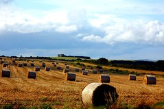 Hay Bales with a View............the end of Summer (MarsW) Tags: ireland sea cloud northernireland breathtaking donegal pictureperfect haybales castlerock northcoast bishopspalace mussendentemple blueribbonwinner passionphotography mywinners abigfave platinumphoto citrit worldpicture areaofoutstandingnaturalbeauty theunforgettablepictures diamondstars betterthangood everydayissunday perfectphotograher goldstaraward worldwidelandscapes unforgettablelandscapes spiritofphotography amazebeamazed absolutelystunningscapes rubyphotographer downhilldemense photographersgonewild clickthecamera artofimages fabulousflics