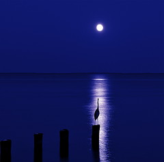 I Guess She Ain't Coming (Baab1) Tags: nightphotography moon reflections lowlight nikon bravo seascapes blues fullmoon dating bea