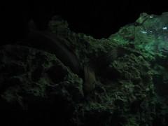 IMG_8126 (ijliao) Tags: october acquarium 2008  kenting  200810 20081005