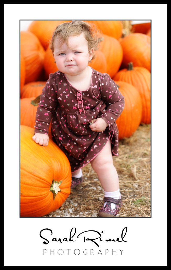 pumpkin patch 14