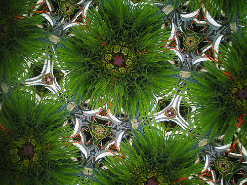 Not a Christmas Tree Closeup, but Something More Kaleidoscopic