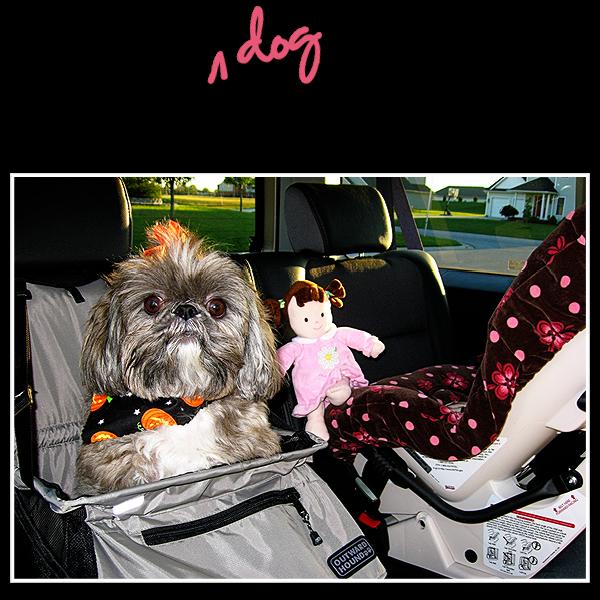 babydog_on_board