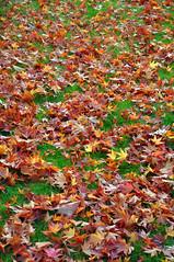 http://farm4.static.flickr.com/3212/3003829528_2442df6e06_m.jpg