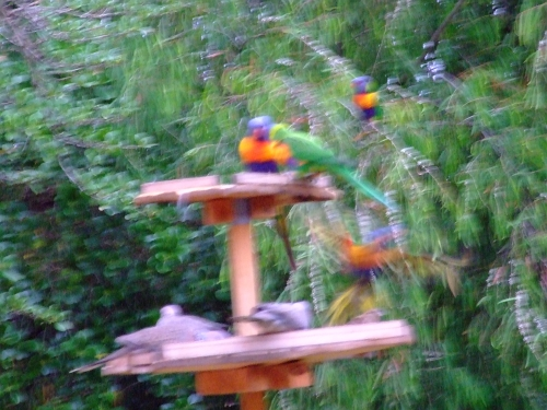 blurry birds 01