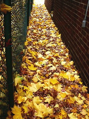 saying goodbye (leafy) Tags: autumn brick fall loss leaves fence vanishingpoint pittsburgh