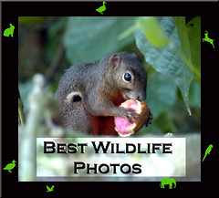 My Best Wildlife Photos Award - invitation only