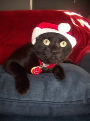 is that santa claws i hear?