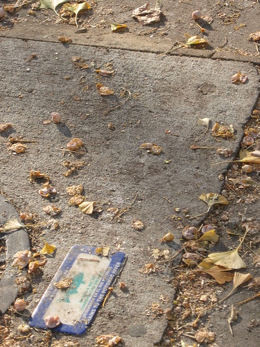Gingko fruit and leaf litter