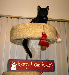 A Sign for Santa (Mr. Ducke) Tags: christmas cat kitty condo parsnip kissablekat bestofcats