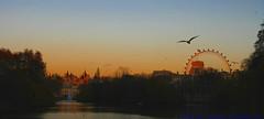 Wheel meet again.... (law_keven) Tags: park trees sunset england sky lake london water fountain gulls milleniumwheel stjamesspark explore500 theperfectphotographer goldstaraward