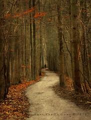 the pathless path (larsvandegoor.com) Tags: forest path amsterdamsebos lastleaves aplusphoto theunforgettablepictures overtheexcellence larsvandegoor thesecretlifeoftrees ostrellina