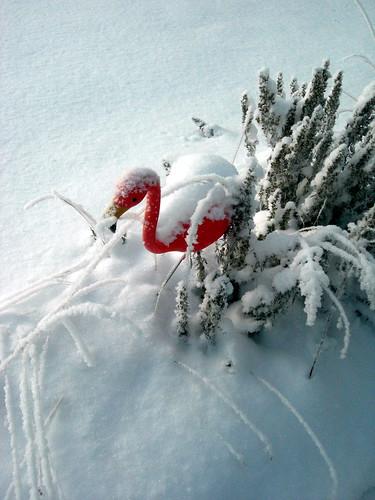 snowbirds3